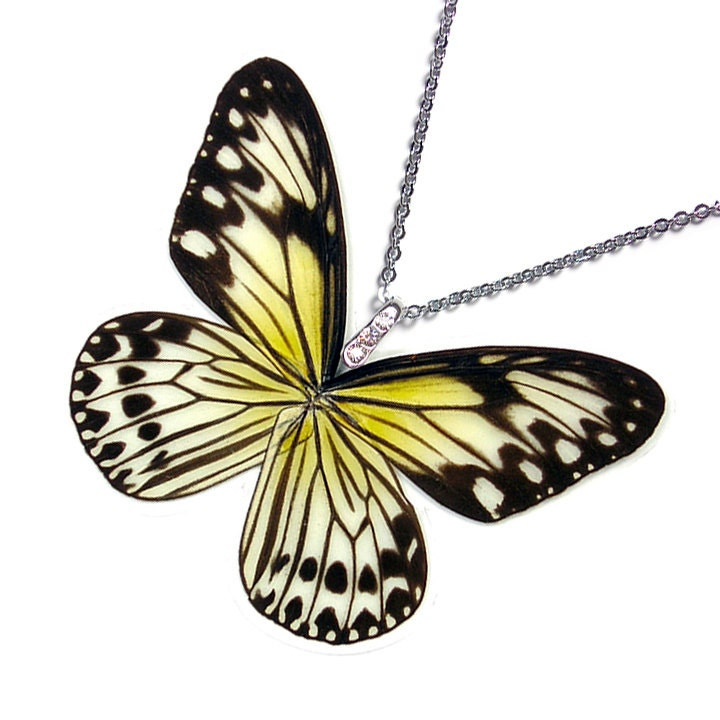 Real Butterfly Wing Necklace / Pendant WHOLE Ideopsis Gaura