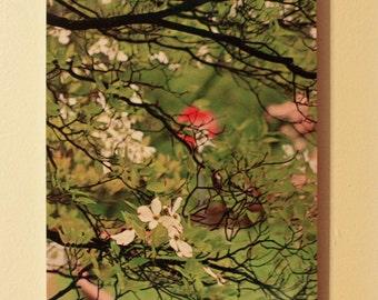 BEAUTIFUL SPRING BLOSSOMS - 8 x12 original photo on natural wood board