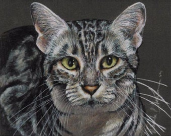 Colored Pencil Egyptian Mau Cat Drawing