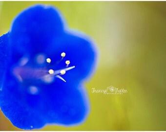 Spring Wild Blue Flower Fine Art Canvas wrap- Macro 2