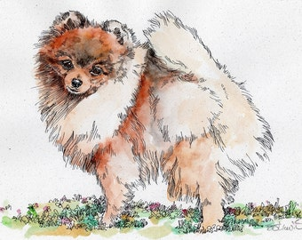 POMERANIAN Original Watercolor on Ink Print Matted 11x14 Ready to Frame