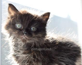 Black Kitten Digital download / backlit kitty / fluffy / soft / sweet photo / Cat / pet / Photograph / Art download / Home Decor / Halloween