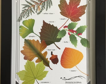 Art Print: Field Guide to Leaves