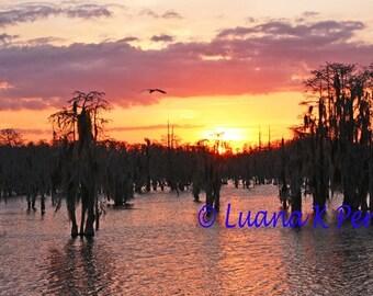 Louisiana Bayou Beauty
