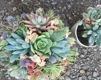 Succulents with dried coral and blue floral accents