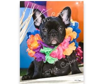 Hawaiian French Bulldog Puppy Cards - Set of 2 Cards