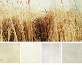 Photoshop Textures: White Washed