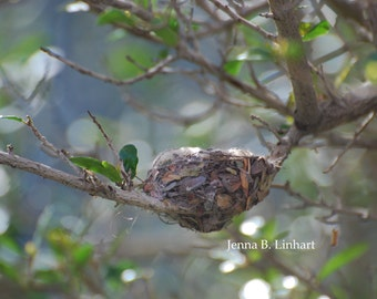 "Nature Photography, Humming Bird Nest,Abstract Nature Art, Green Brown Blue, ""Secret Home"", Fine Art Print, Branches, Arizona Wildlife"