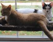 Ocean - Curious Cats Window Perch