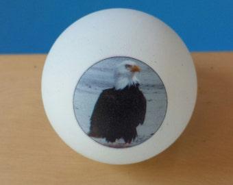 One Dozen Photo Ping Pong Balls-Free  USA Shipping