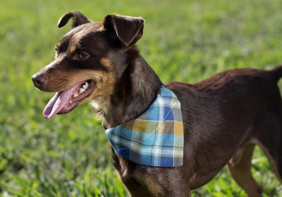 Detachable bandana and collar set, gingham check, plaid bandana, removable bandana and collar combo, usagiteam bandana collar