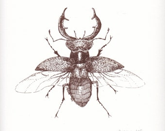 Stag Beetle Print - Brown Hand Pulled silk screen screenprint