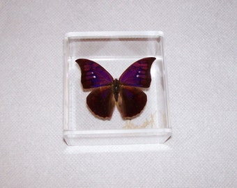 Real Gorgeous Rare Deep Purple Single Butterfly