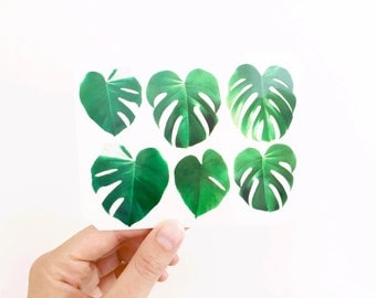 Monstera Palm Temporary Tattoo Multipack