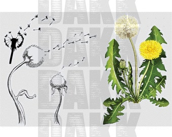 Dandelion SVG and PNG files