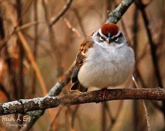Bird photo card, photo note card, blank card, Wildlife photo card, Bird photography, bird card, Bird Stationary, greeting card, Sparrow