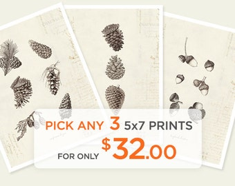 Special Promo - Any 3 5x7 Prints for only 32 dollars