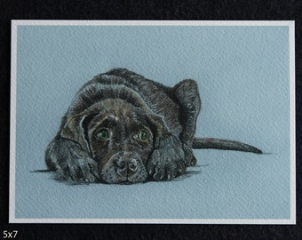 Chocolate Lab Print, dog art, puppy art, dog illustration, dog art, puppy print