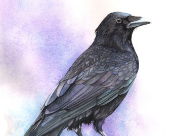 Crow print of watercolour painting A4 size medium print C4715 wall art print - bird art print