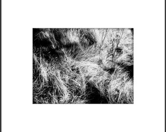 Large Wall Art, Grass Poster, Black and White Botanical Photography, High Contrast Black and White, Southwest Grasses, Summer Landscape