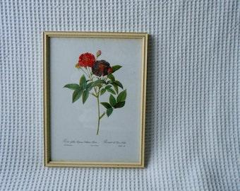 Framed Red Rose Print Pretty vintage Rosa Rosier