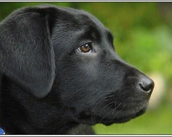 4 Dog Puppy Black Labrador Retriever Dogs Puppies Stationery Greeting Notecards /  Envelopes Set