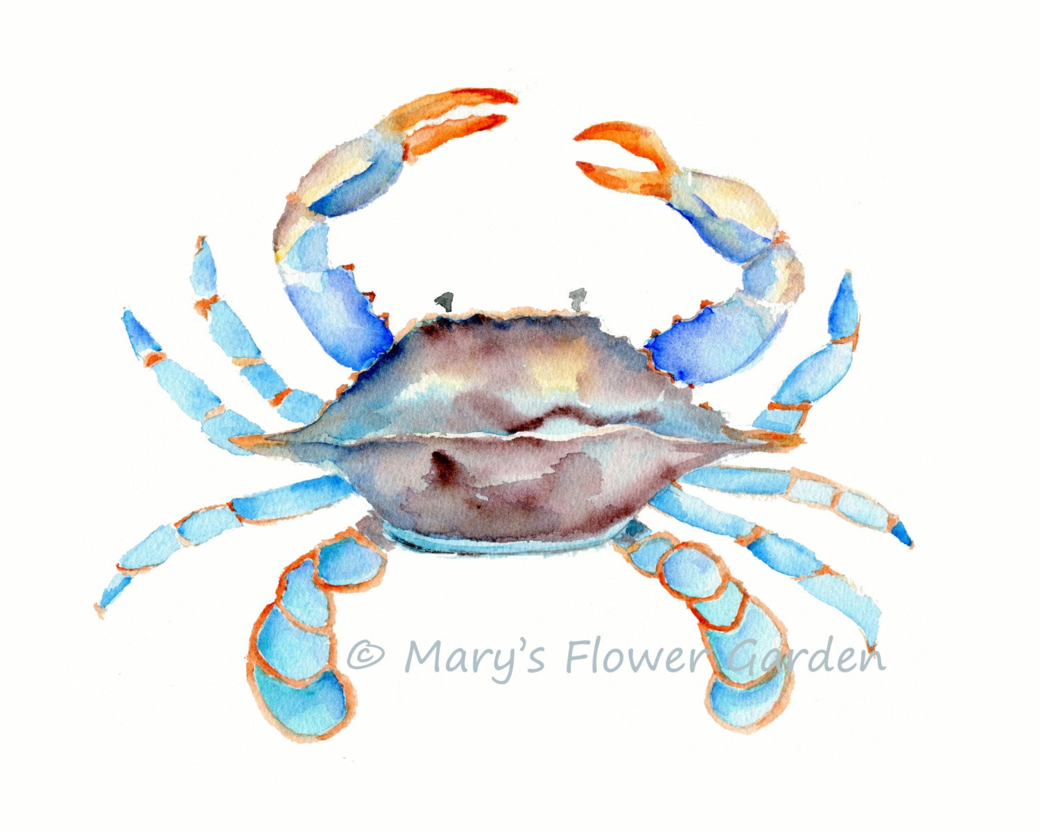 Blue crab watercolor crab art sea life art beach house for Sea life paintings artists