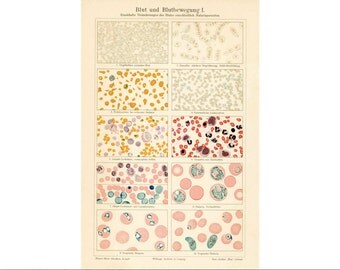 BLOOD & blood disease glorious science medical print under the microscope