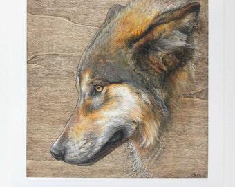 Giclee Print Wolf