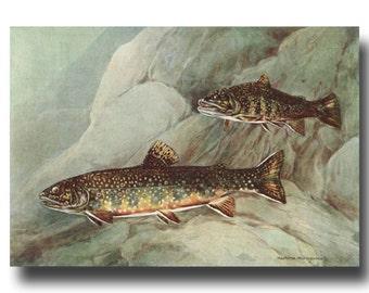 "Trout Fishing Print, Fly Fishing Art (Lake House Decor, Vintage Fish Art) --- ""Brook Trout"" No. 129"