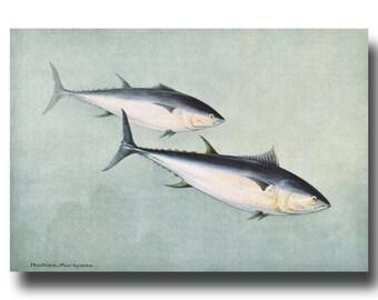 """Fish Art Print, Antique Beach House Decor, 1930s Ocean Wall Art --- """"Blue Fin Tuna"""" No. 54"""