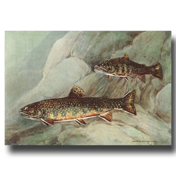 Trout fishing print fly fishing art lake house decor for Fly fishing decor