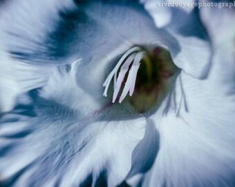 Flower Photograph, Blue Decor, Feminine Art, Soft Blue, Floral Photography, Wall Art, Blue Flower Art, Bedroom Decor, Botanical Art