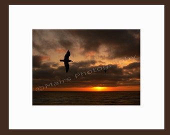 Spring Ocean Clouds Orange Gray READY TO SHIP, Red Gray Golden Sunset, Soaring Seagulls, Fine Art Photography signed matted 5x7 print
