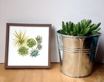 Watercolor Succulent Plant Painting