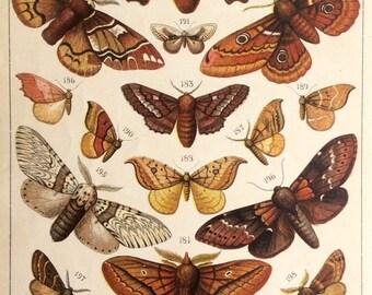 Original Antique MOTH BUTTERFLY 1905 Bookplate Butterflies Chromolithograph Lepidoptera Print Circa Home Decor Vintage Print