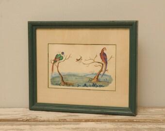 Original Painting Parrots