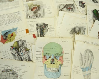 100 Vintage Style Illustrations with Color Anatomy Science Vintage Paper Pack Cut Book Pages Skulls Bones Ephemera Pack 1980s olivemloudiy