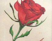A Single Red Rose - Original Framed Watercolor Painting - Introductory SALE price