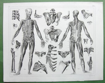HUMAN ANATOMY Muscles Ligaments Skeleton Biceps Abductor - 1844 SUPERB Original Antique Print