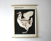 Vintage. Pull down chart. Mid Century. Educational. German DDR. Biology. School. Science. Poster. Canvas. Chicken (408)