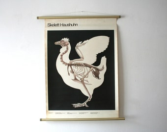 Vintage. Pull down chart. Mid Century. Educational. German DDR. Biology. School. Science. Poster. Canvas. Chicken (405)