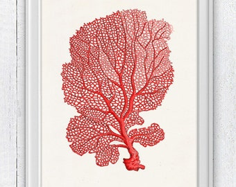 Sea fan coral no.03 - sea life print-Marine  sea life illustration A4 print SPC036