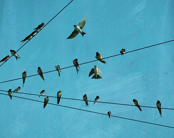 Swallow photo, birds photography, swallows art, swallow wall art, birds on a wire, shabby home decor, turquoise, teal