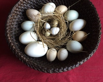 16 Assorted Blown Eggs for Pysanky, Pisanki, Home Decor, Education, Photography, Crafts, Carving and Jewellery