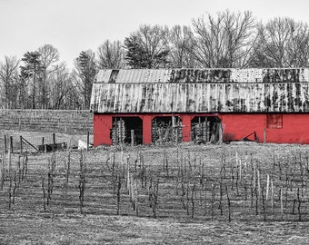 Red Barn in a Vineyard