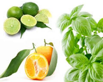 Lime Basil Mandarin Jo Malone Type Premium Fragrance Oil Available In Several Sizes