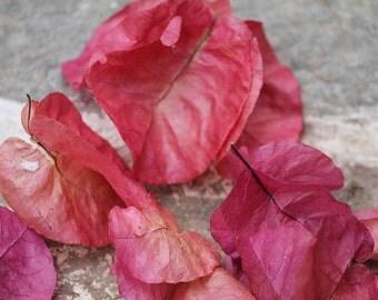 "Bourgainvillea Glabra or Paperflower - Greek Islands Travel Photography - 8x10"" print"