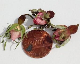 Organic Dried WILD ROSE BUDS 1 oz( 28 gr) wild rose flowers.