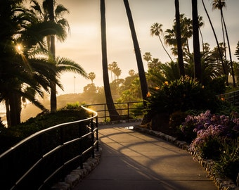 Palm trees and flowers along a walkway at sunset, at Heisler Park, Laguna Beach, California - Photography Fine Art Print or Wrapped Canvas